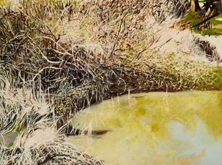 Brambles Branches and Reflections, June Yokell