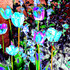 20120222051044-flowers