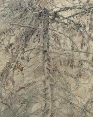 Untitiled (Haim's Tree), Daniel Bauer
