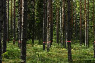 Langjso Woods 9.3, Suzi Davidoff, Rachelle Thiewes