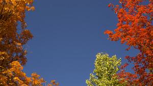 20120314225622-3_colors_of_fall_1