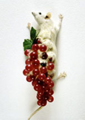 Rat with Grapes,Carlee Fernandez