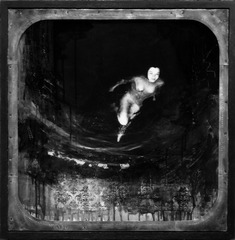 Twilight Bloom, David Hochbaum