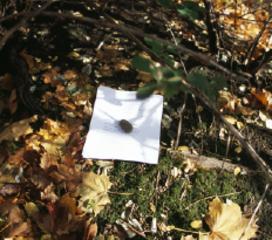 Photo: Frank Heath, still from Graffiti Report Form, 2012, HD Video, 50min,