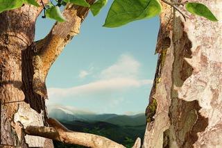 Treetop, Boo Ritson