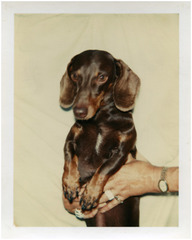 Untitled (Dog), ,Andy Warhol