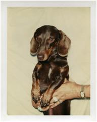 Untitled (Dog), , Andy Warhol