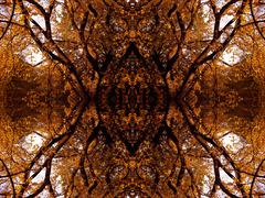 20120319035445-autumn_tree_-1