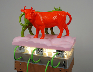 Cows, Chad Curtis
