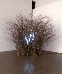 Thicket, Laura Forman