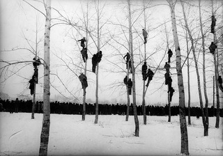 People in Trees (The Rooks Have Arrived),Mikola Gnisyuk