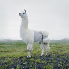 Untitled #131, from the series Until the Kingdom Comes, Simen Johan