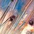 20120325020409-strata_series_i