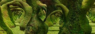 Topiary, Zartelo Costa Rica  , Jenny Okun