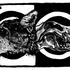 20120327015519-extincion3web