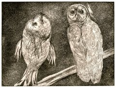 20120328135243-05_owl_and_fish