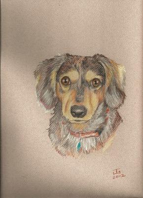 20120328202901-dog_4_steve