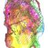 20120329022903-drawing_specimen_04
