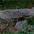 20120401120507-banstolska_gljiva_1_copy