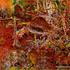 20120401121519-gljiva_i_kobra_copy