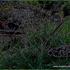 20120401121639-gljiva_i_pas_copy