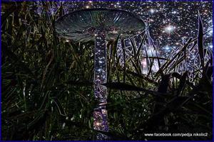 20120401124847-svemirska_gljiva_copy