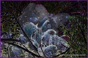 20120401130555-svemirske_gljive_c