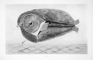 l`évade (Der Ausbrecher), Max Ernst