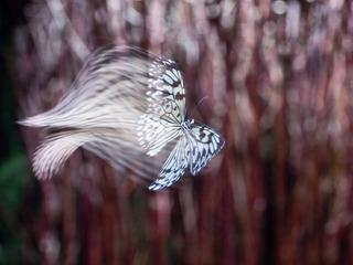 Paper Kite, Kavan Geary