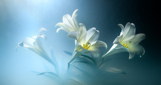 Easter Lilies,Kavan Geary