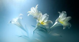 Easter Lilies, Kavan Geary