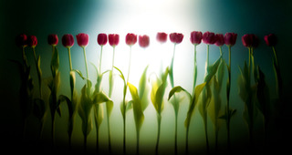 Tulip Line, Kavan Geary