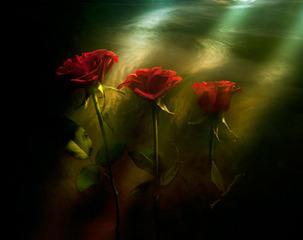 Red Roses, Kavan Geary