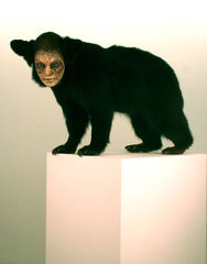 Black Bear, Untitled,Kate Clark