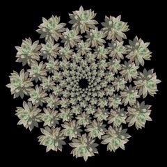 Succulent Mandala, Thomas Cox