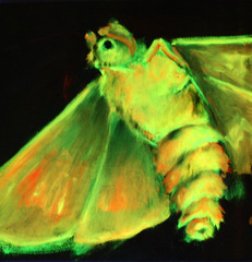 Black Light Moth 1, Lily Simonson