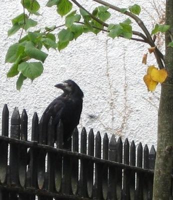 20120423005123-tipp_-_09012011_-_hark_the_raven