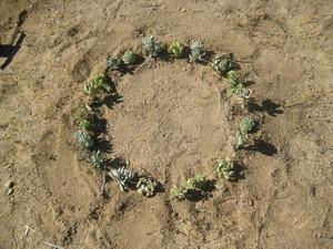 20120426092009-flora-ground72