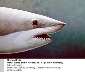 Great White Shark Portrait,Richard Ellis