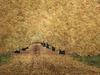 20120503072320-goldenleaves_lo