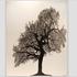 20120503204531-mighty_oak