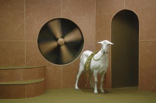 Goat Odyssey, Hayden Fowler