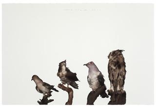 Bird No .2 , Guo Hongwei