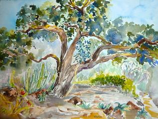 Huntington Gardens Oak in Canary Island Bed, Jennifer Bentson
