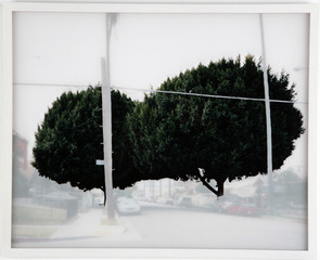 Ficus #4, Yoko Kanayama