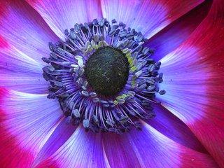 Urban Purple Planet ~ Love Urban Nature Series, Karin Lisa Atkinson