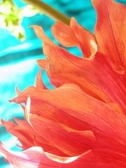 Urban Colors, Karin Lisa Atkinson