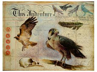 Falcon, Tania Beaumont