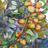 20120521233947-eade_wild_apple_branch_300dpi_copy
