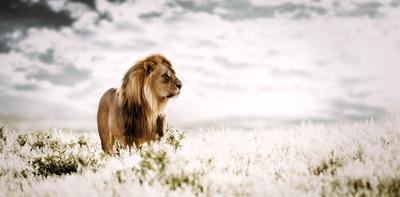 20120525100517-__klaus_tiedge_t1_4677_pride_of_africa